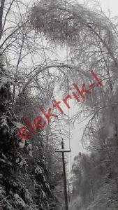 Деревья нависли над проводами