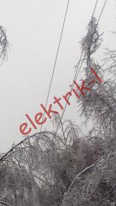 Короткое замыкание вследствие падения дерева на оголенные провода