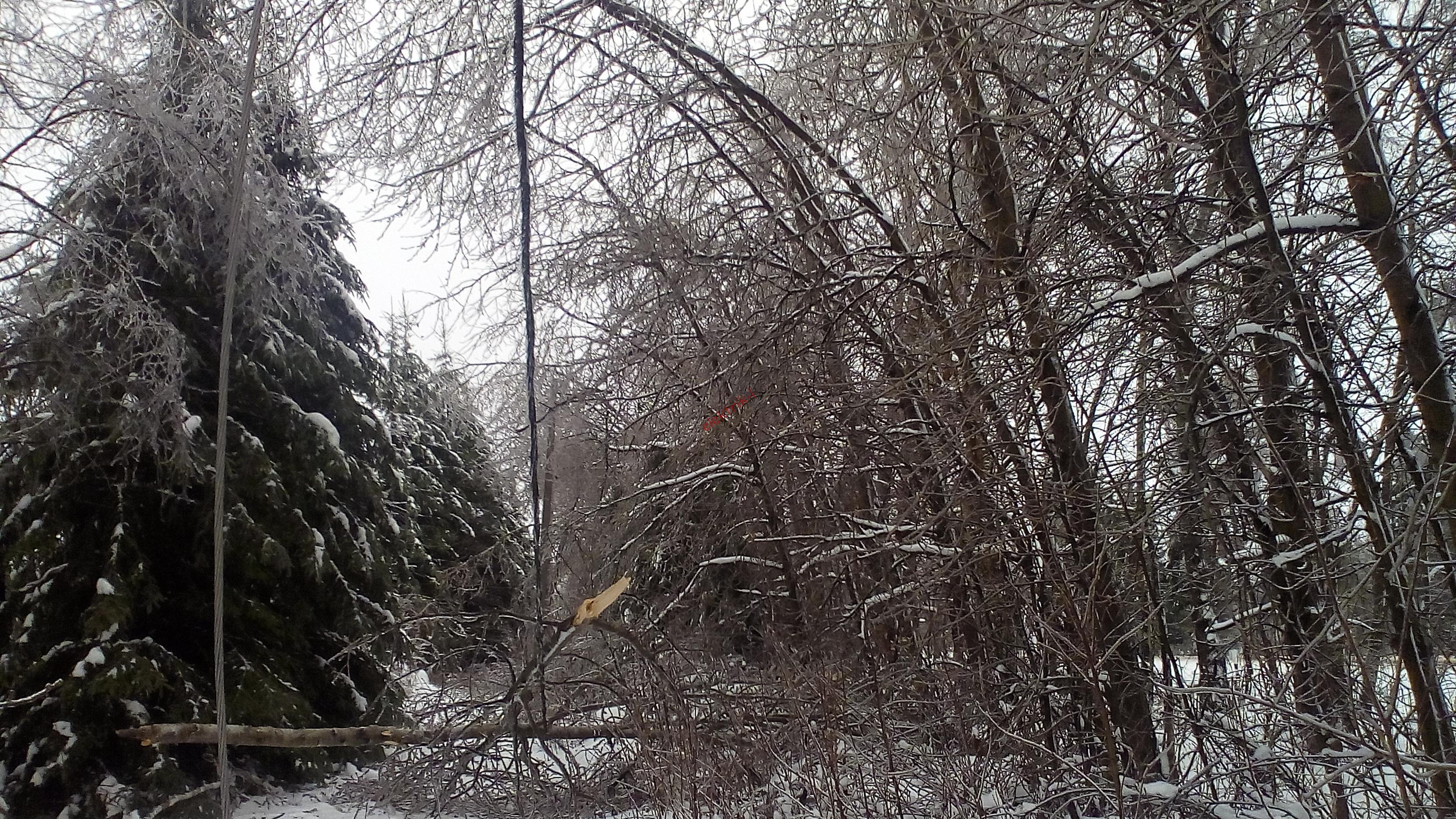 Упавшее дерево на проводах